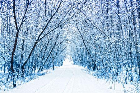 snowy background: Invierno