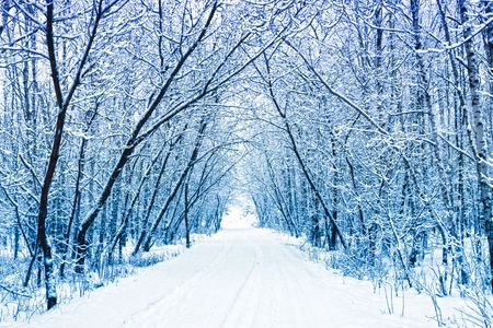 winter forest: Winter Stock Photo