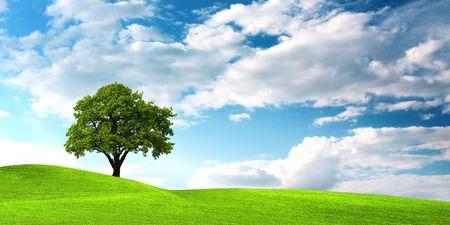 broad leaf: Oak tree on green field Stock Photo