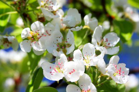 Beautiful spring photo