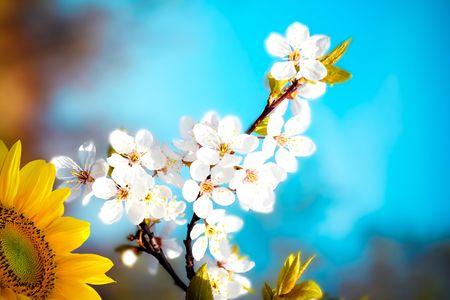 Beautiful spring flower photo
