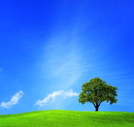 Green tree Stock Photo - 6728696