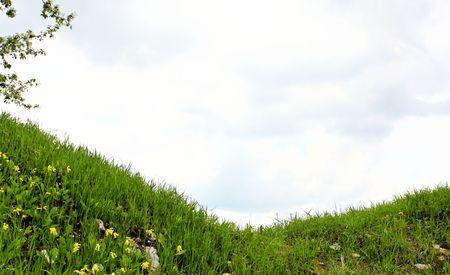 Green grass Stock Photo - 6960732