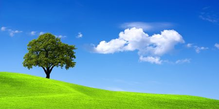 Green landscape photo