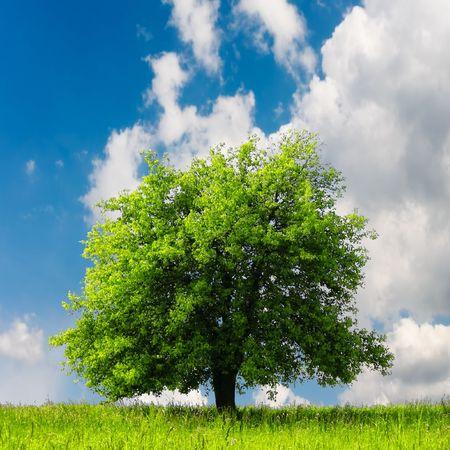 Green tree  Stock Photo - 7053319