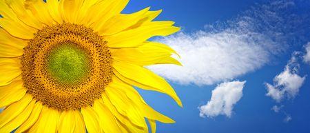 Summer banner photo