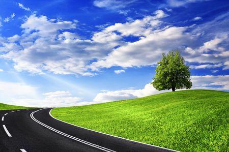 destination scenic: Green tree and empty road