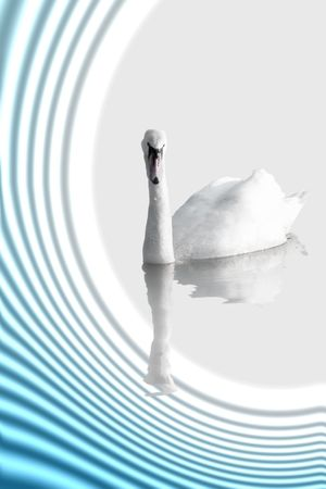A Swan on abstract background photo