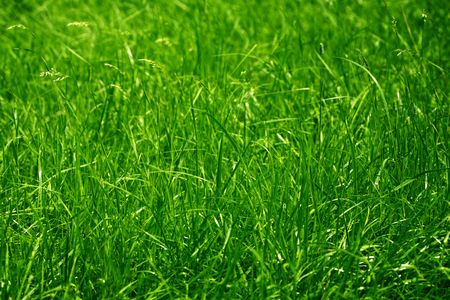 Green grass background Stock Photo - 7546377