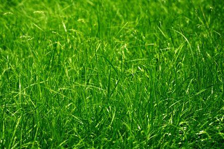 Green grass background Stock Photo - 7546377