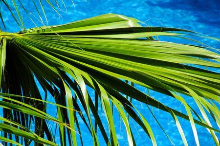 Palm tree and blue sea Stock Photo - 7568957