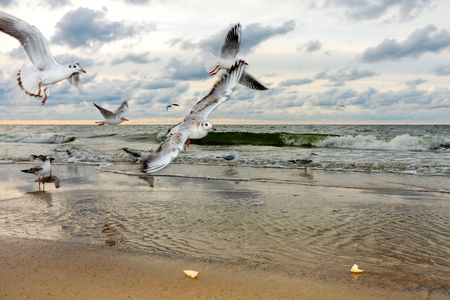 Flying Seagulls at Sunset Stock Photo - 7743502
