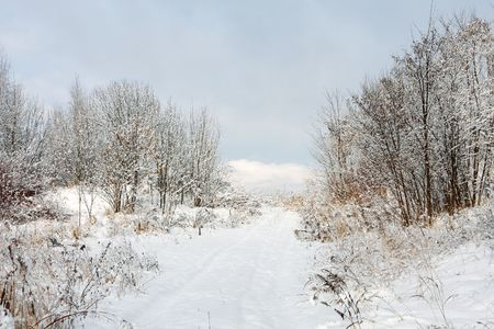 Winter landscape Stock Photo - 7743651