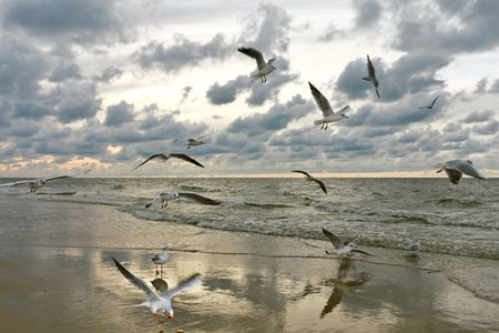 water birds: Flying Seagulls on Sunset Stock Photo