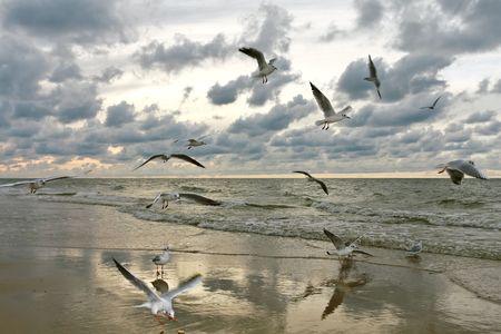 dieren: Zee meeuwen vliegen op Sunset