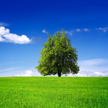 Tree on green field Stock Photo - 7743867