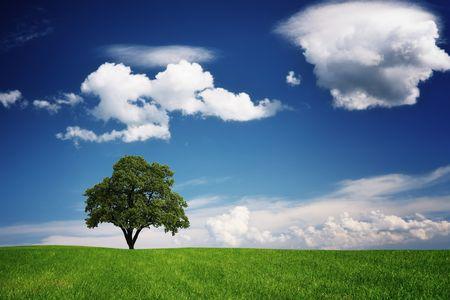 Green tree  Stock Photo - 7840919