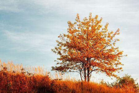 Autumn landscape 스톡 콘텐츠