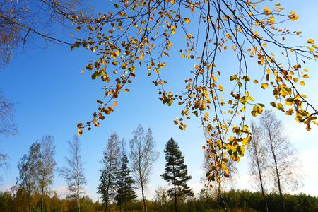 Autumn forest Stock Photo - 7937110