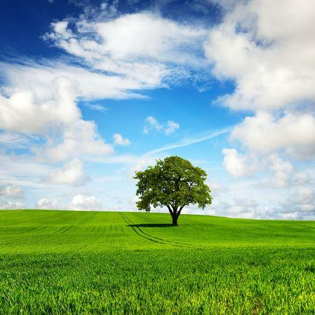 green planet: Ma plan�te verte