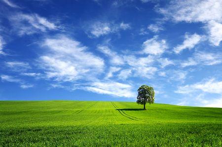 緑の風景 写真素材
