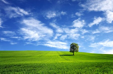 grass field: Green landscape