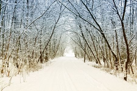 Cold and snowy winter road Stock Photo - 8195425