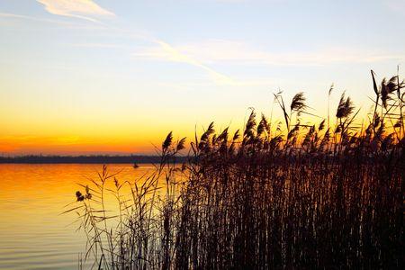 The bulrushes against sunlight over sky background in sunset Stock Photo - 8195424