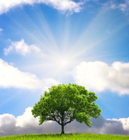 big scenery: Green tree