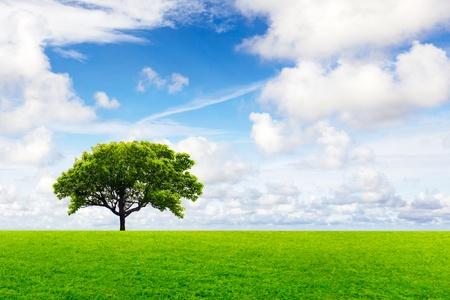 medio ambiente: Medio ambiente mundial