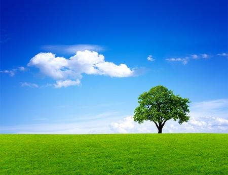 Green nature landscape 版權商用圖片 - 8331288
