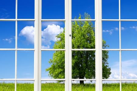 Ecology Window photo