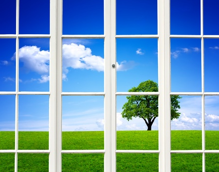 view window: Ecology View Stock Photo