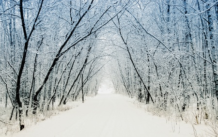 Winter alley Stock Photo - 8710409