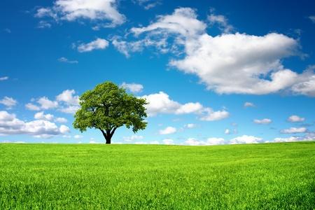 jeden: Příroda na pozadí
