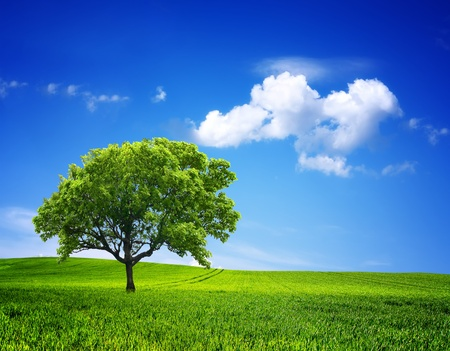 Natur-Umgebung Standard-Bild