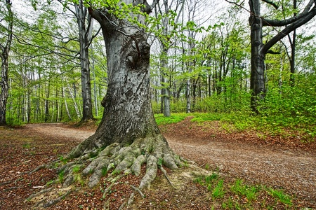 Old tree in the park Stock Photo - 8817769