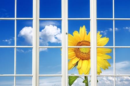 Sunny Window photo