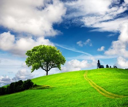 Paysage de printemps Montagne