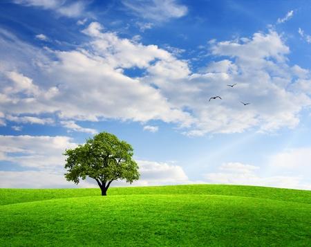 roble arbol: Paisaje de primavera con roble y cielo azul Foto de archivo