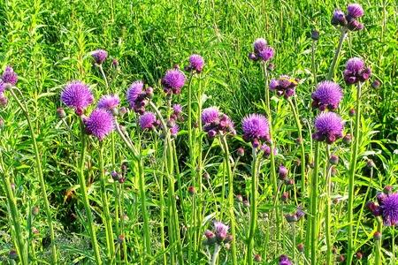 Spring Meadow Stock Photo - 8985193