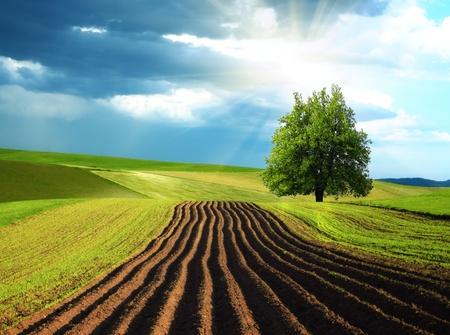 agricultura: Paisaje de monta�a de verano
