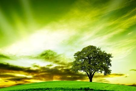 Oak tree in summer Stock Photo