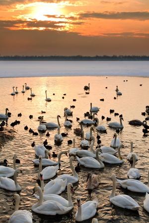 Wildlife at sunset photo