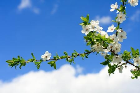 Spring Flowering Bushes photo