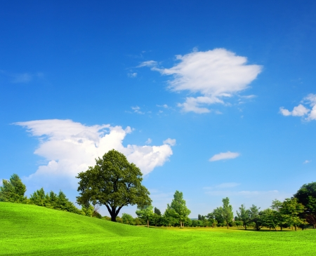 over hill: Green field, springtime Stock Photo