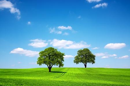 Eco Planet photo