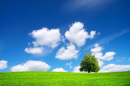 over the hill: Naturaleza verde