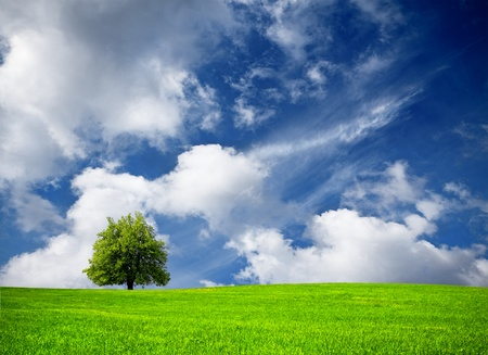 over hill: Tree and cloudy sky
