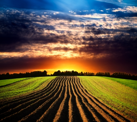 corn stalk: Landscape at sunset Stock Photo